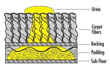 pet urine in carpets