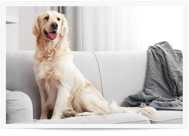 pet urine and odor removal los angeles